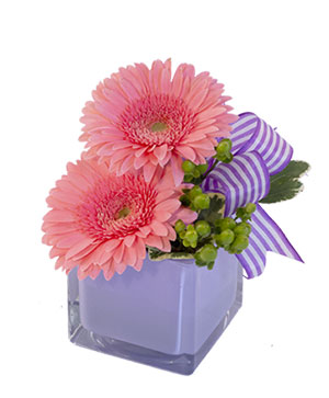 Petite Gerberas Floral Design in Norway, ME | Green Gardens Florist & Gift Shop
