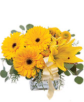 Petite Yellow Flower Arrangement in Draper, Utah | Draper FlowerPros