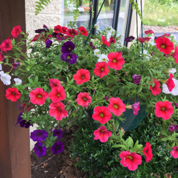 Petunia Combo Basket With Any Purchase