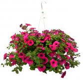 Hanging Outdoor Plant  Basket