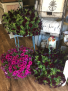 PETUNIA HANGING BASKETS JUST BECAUSE