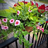 Assorted Hanging Basket Plant