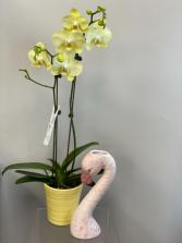 Phaelaenopsis Orchid & Flamingo Duo