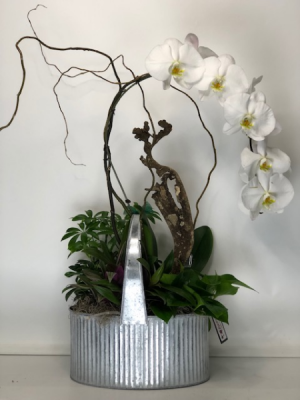 Phalaenopsis Orchid Dish Garden Dish Garden of Plants with Orchid  in North Bend, OR   PETAL TO THE METAL FLOWERS