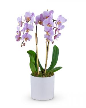Phalaenopsis Orchid Flower Arrangement in Du Bois, PA | BRADY STREET FLORIST