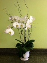 Phalaenopsis Orchid Planter Orchid Plant