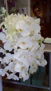 Phalaenopsis Wedding