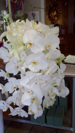 Phalaenopsis Wedding