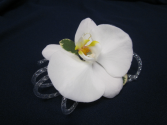 Phalaeonpsis Orchid with Silver Tube Ribbon, $35