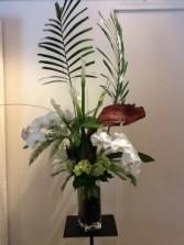 phaleonopsis orchids modern arrangment