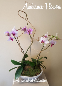Phantastic Phal Bowl