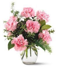 1/2 Dozen Carnations