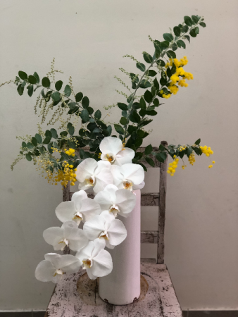 Philadelphia  phalenopsis orchid with foliage perfect for any event room