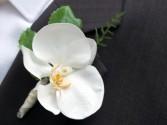 Phalaenopsis Orchid boutineer