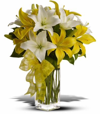 Pick A Lily HFWEB523
