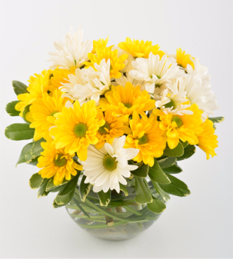 """""""PICK ME UP"""" White and Yellow daisies in a small  vase!"""