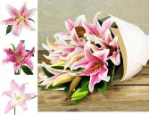 Simply Pink Fragrant Lilies wrapped in paper Loose cut flowers, wrapped