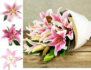 Simply Pink Fragrant Lilies wrapped in paper Loose Flowers, Wrapped