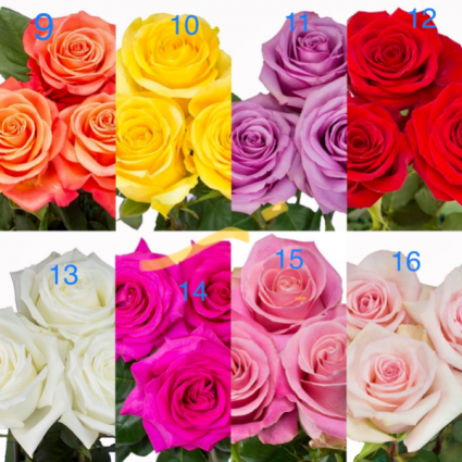 Pick your color.  9–16 Roses. Half or full dozen