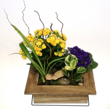 Picture Perfect Deluxe Dish Garden