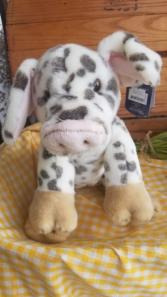 Piglet Cuteness!