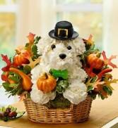 Pilgrim Pooch a-DOG-able
