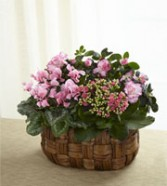 Pink Assortment Plants plant
