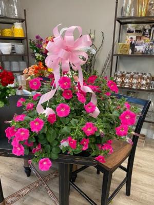 Pink Beauty Petunia  Hanging Basket  in Hermitage, TN   IN FULL BLOOM FLOWERS + GIFTS