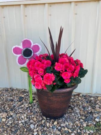 Pink Begonia Planter