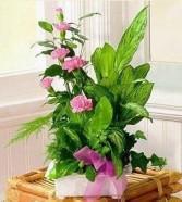 Pink Bloomer