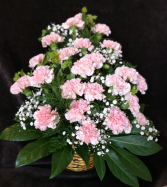 pink carnation in basket pink carnation in basket