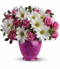 Pink Daisy Delight EF92