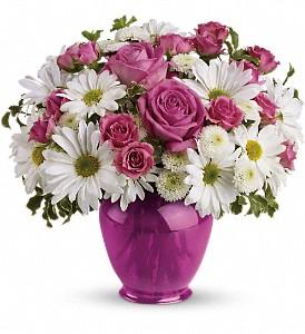 Pink Daisy Delight   TEV07-1B