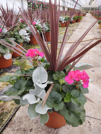 Pink Frost Combo Porch Pot Plants