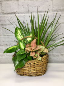 Pink Garden  in Oval Basket