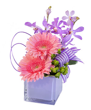 Pink Gerberas & Orchids Floral Design in Cypress, TX | BLOOMS FROM THE HEART