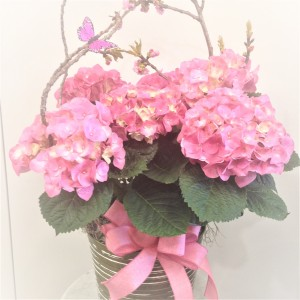 Pink Hydrangea Blooming Plant in Jamestown, NC | Blossoms Florist & Bakery