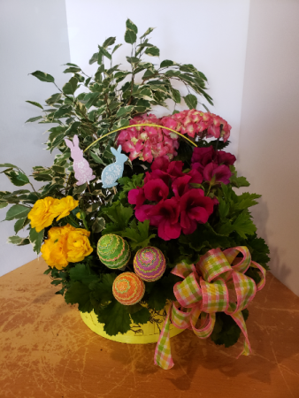Pink Hydrangea Easter basket Plants
