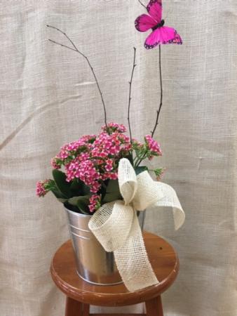 Pink Kalanchoe Plant In Seville Oh Seville Flower Gift