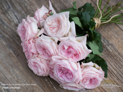 Pink Ou0027Hara Garden Rose Bouquet