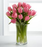 Pink Prelude Tulips 15 stems in Vase