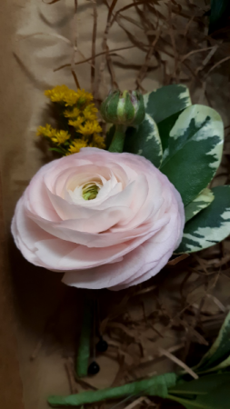 Pink Ranunculus Boutonniere  Boutonniere