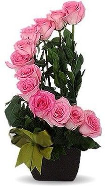 Pink Staircase Roses