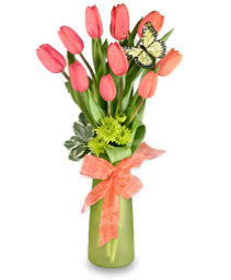 Pink tulips clear vase Fresh tulips