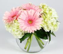 Pink & White Delight Arrangement