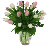 Pink & White Tulips 20 Stems