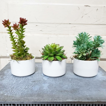 """Plain Jane"" Artificial Plant Trio"
