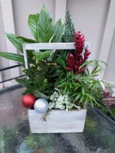Plants in a Wooden Box Beautiful plants