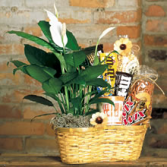 PLANT AND CANDY BASKET