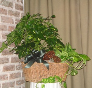 Plant Basket 1 Plant Baskets